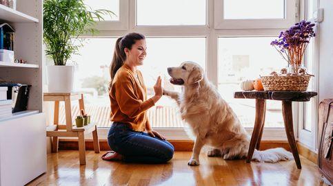 ¿Hasta qué punto entienden los perros lo que decimos? Así procesan nuestras palabras