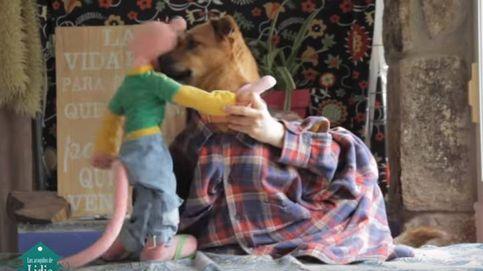 'Tu perrito', la versión de 'Despacito' que conciencia sobre la adopción canina