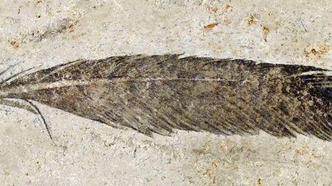 La primera pluma fósil encontrada es de Archaeopterys,