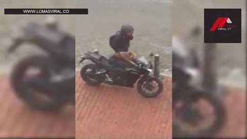 Así prepara un hombre a su perro para que le acompañe en moto