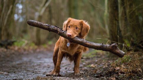 Crumpet, la perra desaparecida en 2010 que ha vuelto a casa
