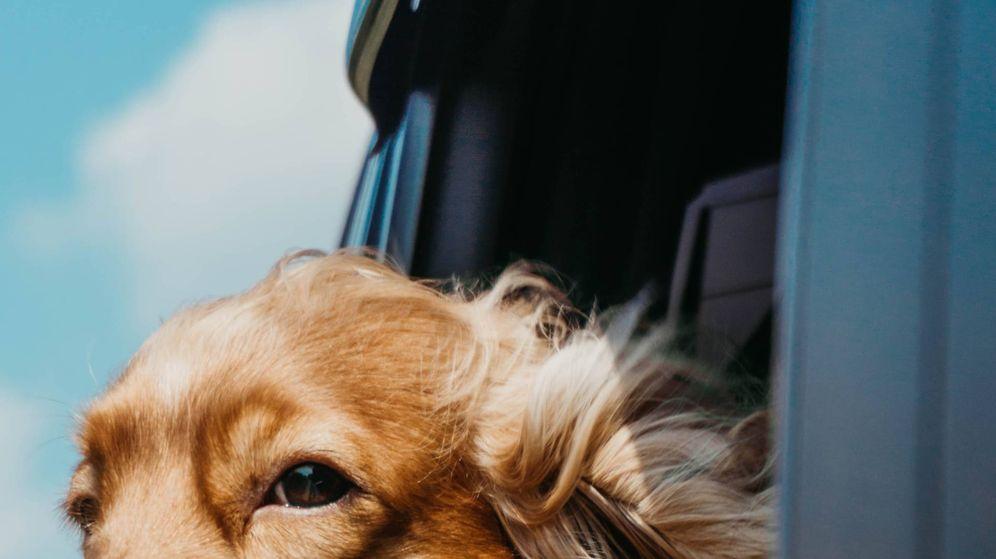 Foto: Ciudades dog friendly para tus vacaciones en España. (Ja San Miguel para Unsplash)