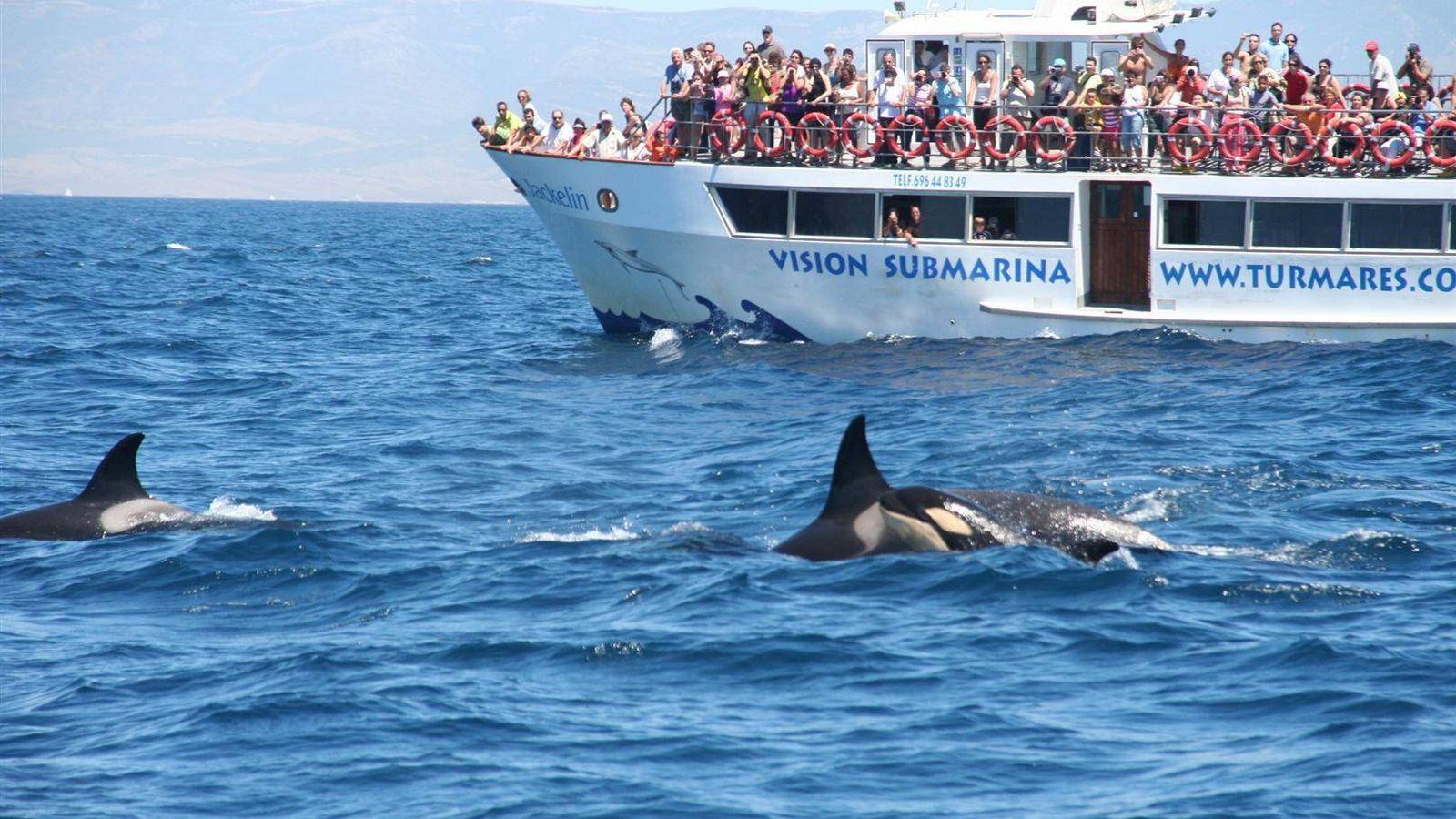 Foto: La observación de cetáceos es una de las actividades de turismo de naturaleza más demandadas