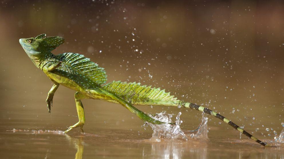 Como Jesucristo, pero demostrado: así se camina sobre el agua