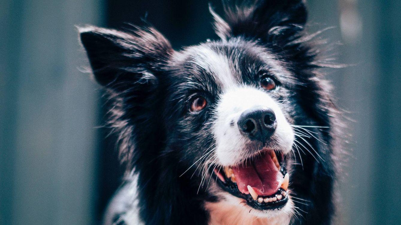Peggy, la perra sorda que aprendió la lengua de signos