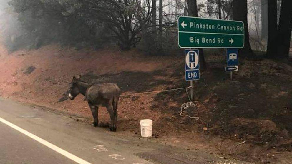 Los californianos se movilizan para salvar a miles de animales de los incendios