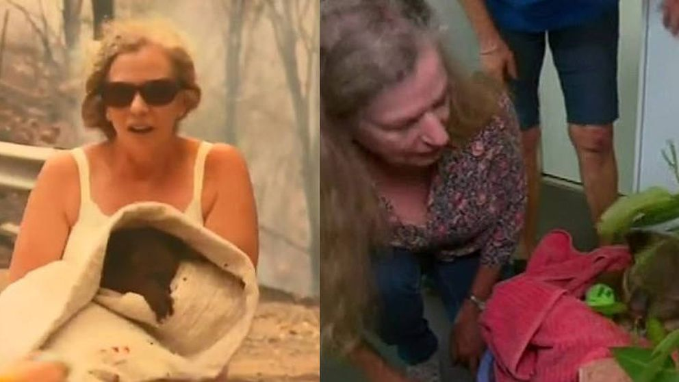 Muere Lewis, el koala al que una mujer salvó de un incendio en Australia