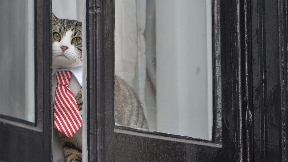 Foto: El gato de Julian Assange, en la ventana de la embajada que le ha hecho famoso (EFE/Hannah Mckay)
