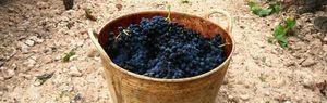 Historia de un vino nacido en Sonsierra