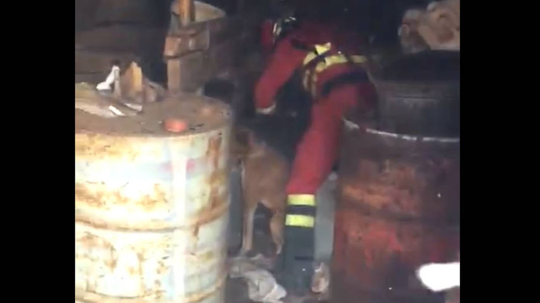 La UME rescata en el último minuto a varios perros en el incendio de Gran Canaria