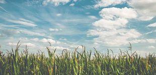 Post de Láseres y placas solares para reducir el uso de pesticidas en el campo