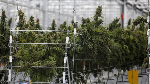 Los socios del Gobierno se lanzan a la carrera para regular el cannabis y presionan al PSOE