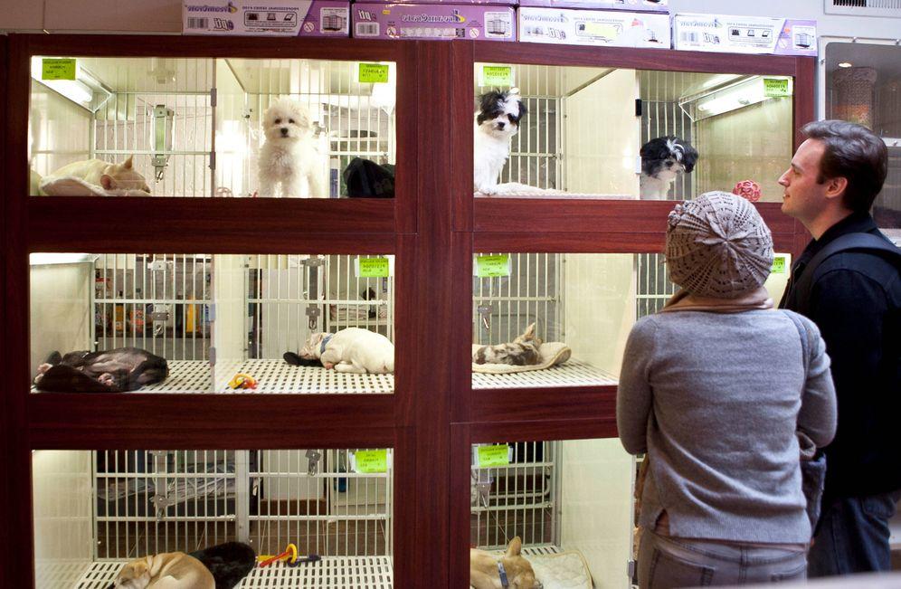 Foto: El escaparate de una tienda de mascotas.