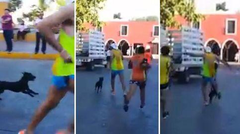 Los tuiteros encuentran al 'runner' que agredió a un perro Que no quede impune