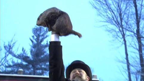 La marmota Phill predice que la primavera llegará pronto