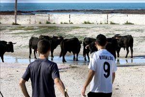 La fuga de siete toros en Cádiz paraliza el rodaje de la última película de Tom Cruise