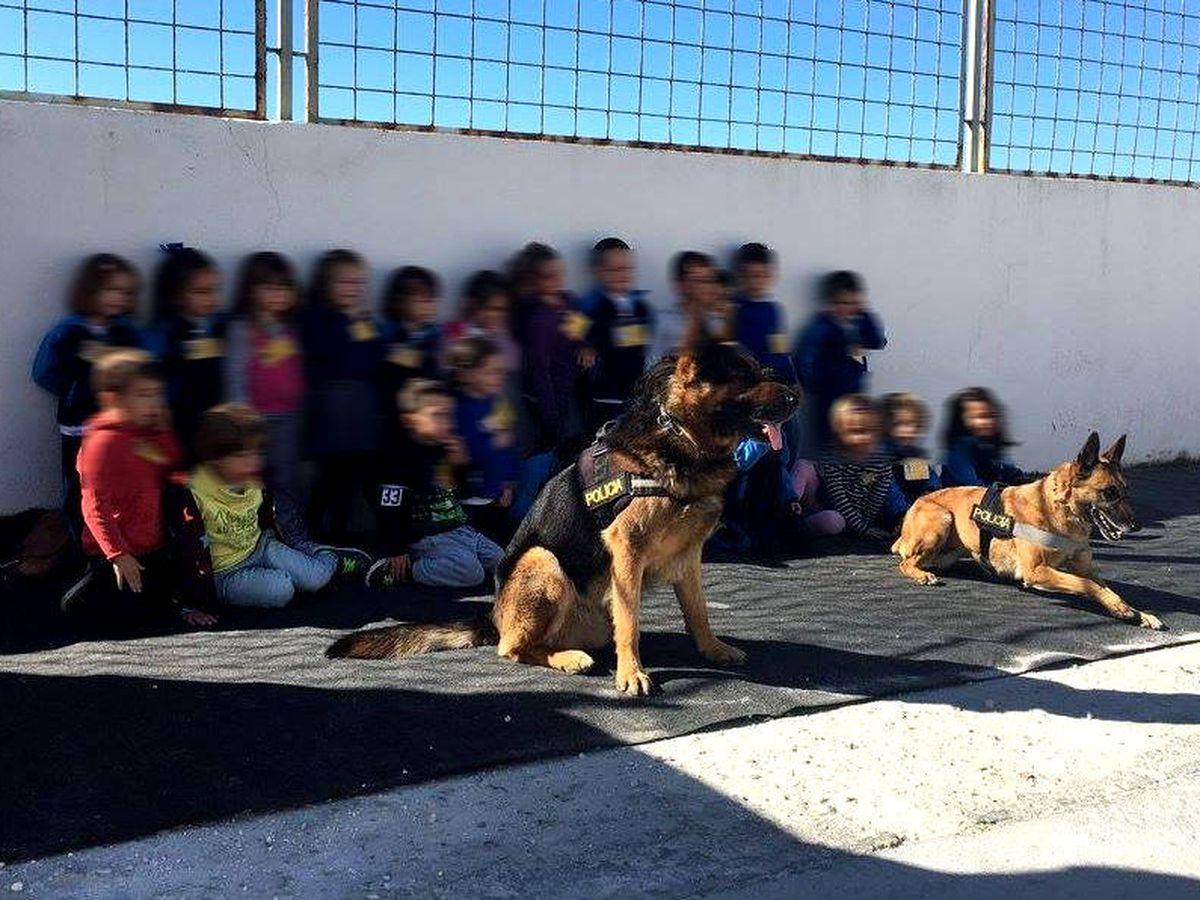 Foto: La Policía Local de Marbella suele visitar centros escolares con sus ayudantes caninos (Foto: Facebook)