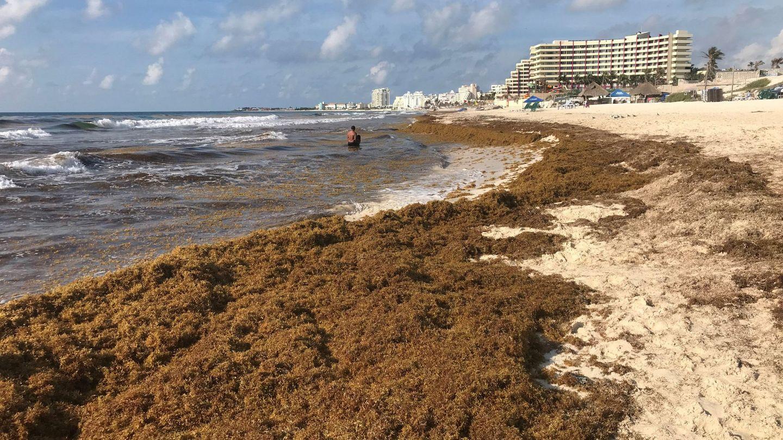 Cada día hay que retirar toneladas de sargazo en la zona hotelera de Cancún