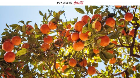 Menos agua, menos fertilizantes: el caso de éxito de los cítricos valencianos