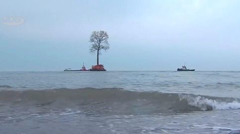 ¿Por qué cruza el mar Negro este árbol de 135 años, 650 toneladas y 40 metros de alto?