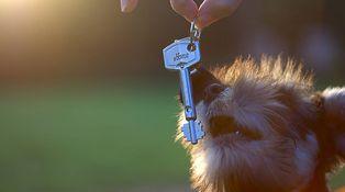 Mis inquilinos acaban de comprar un perro, ¿puedo rescindir el contrato de alquiler?
