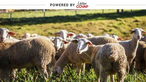 Leche de cabra y oveja, fuente de vitaminas y calcio que complementan tu dieta