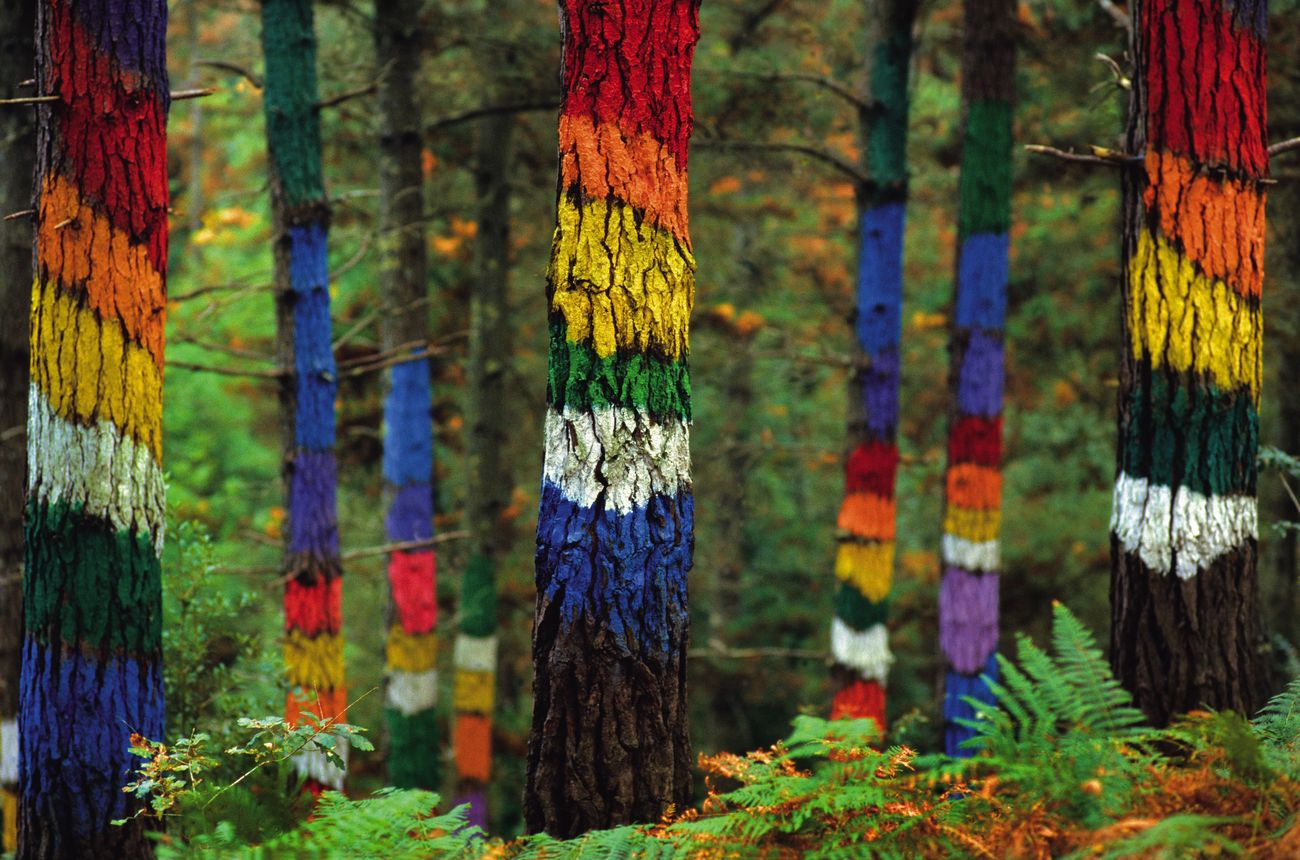 Foto: El bosque de Oma, en Vizcaya (© Turismo Euskadi)