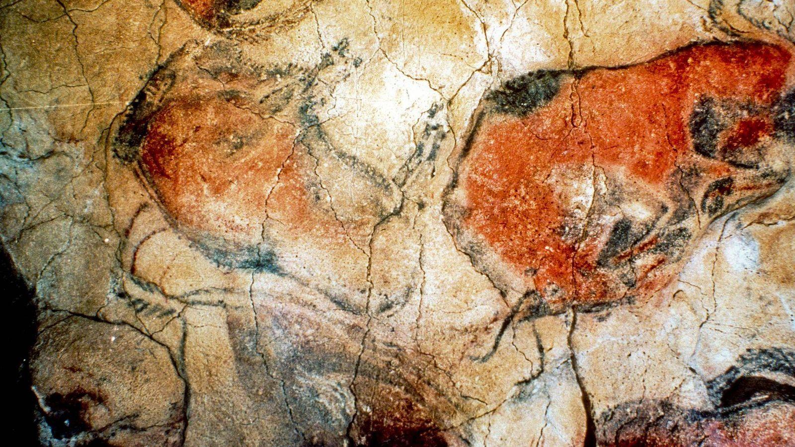 Foto: Fotografía de archivo de las pinturas rupestres en las Cuevas de Altamira. (EFE)