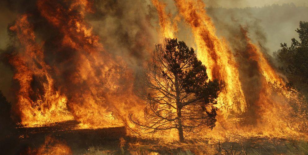 Foto: Incendios forestales: la ciencia detrás del fuego