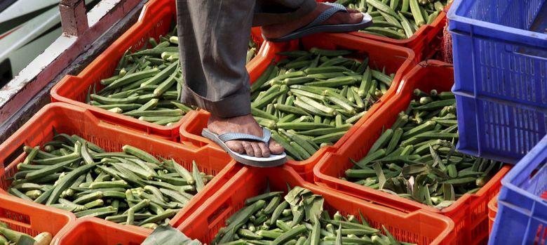 Foto: Las verduras pueden jugar un papel importantísimo para la salud de nuestro cerebro. (Efe)