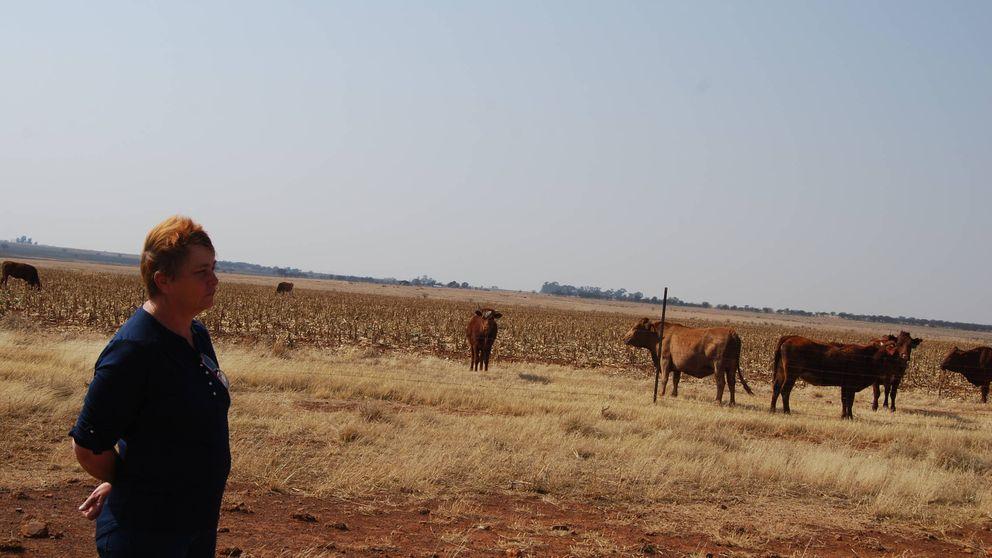 """""""Matar al bóer"""": asesinatos y expropiaciones contra los granjeros blancos de Sudáfrica"""