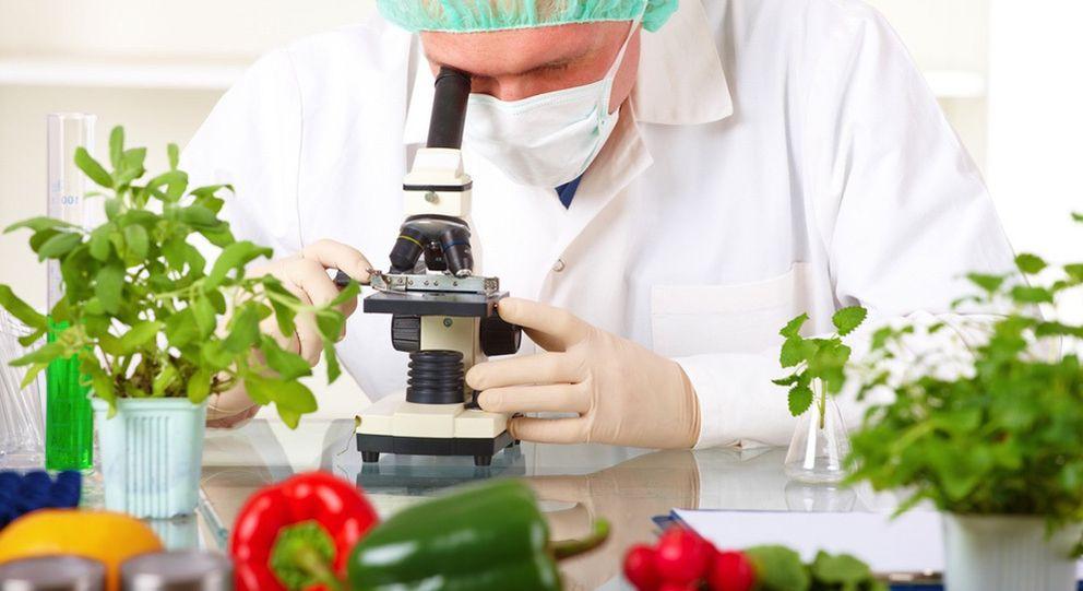 Cocina qu mica en la cocina la explicaci n cient fica de for La quimica y la cocina pdf