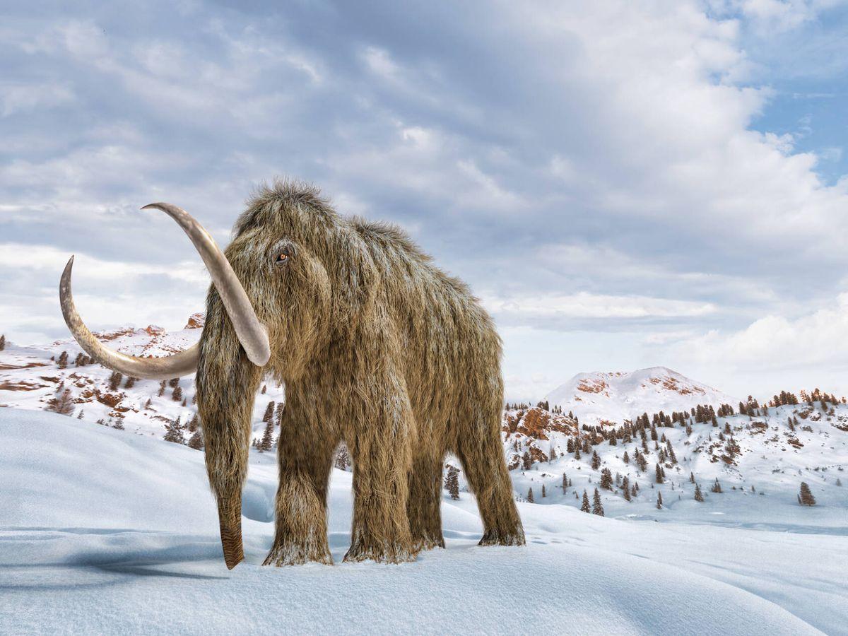 Foto: Reconstrucción de un mamut en 3D. (iStock)