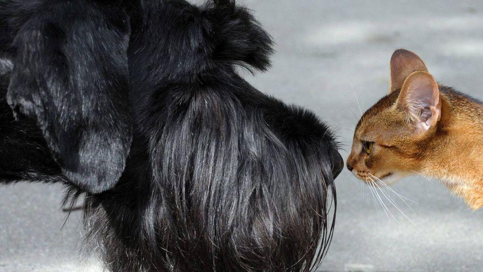 Los humanos podrían transmitir el Covid-19 a perros, gatos y hurones
