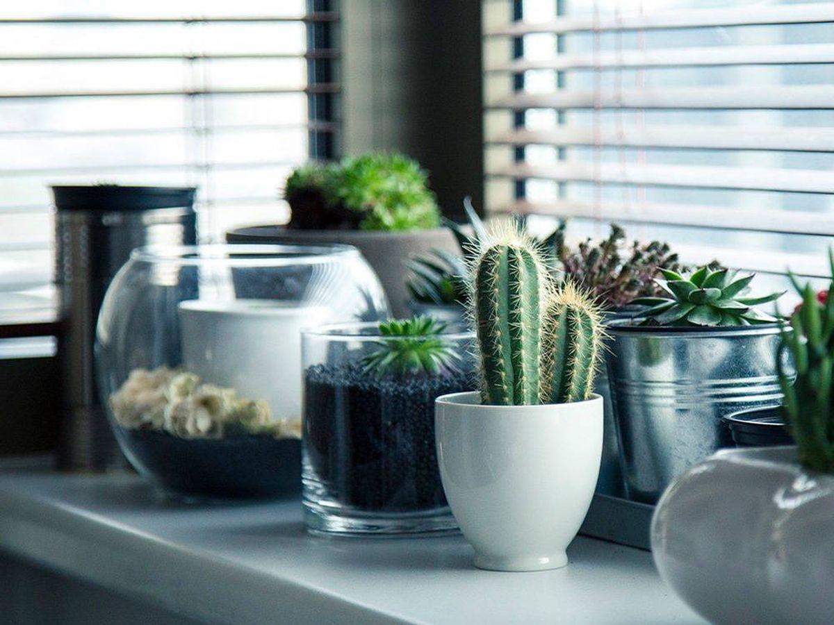 Foto: Tendencias en clave deco para 2021: vuelve lo natural, lo vegetal y el color (Pixabay)