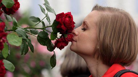 Del sabor del chocolate al olor de las rosas: la química detrás de tu día a día