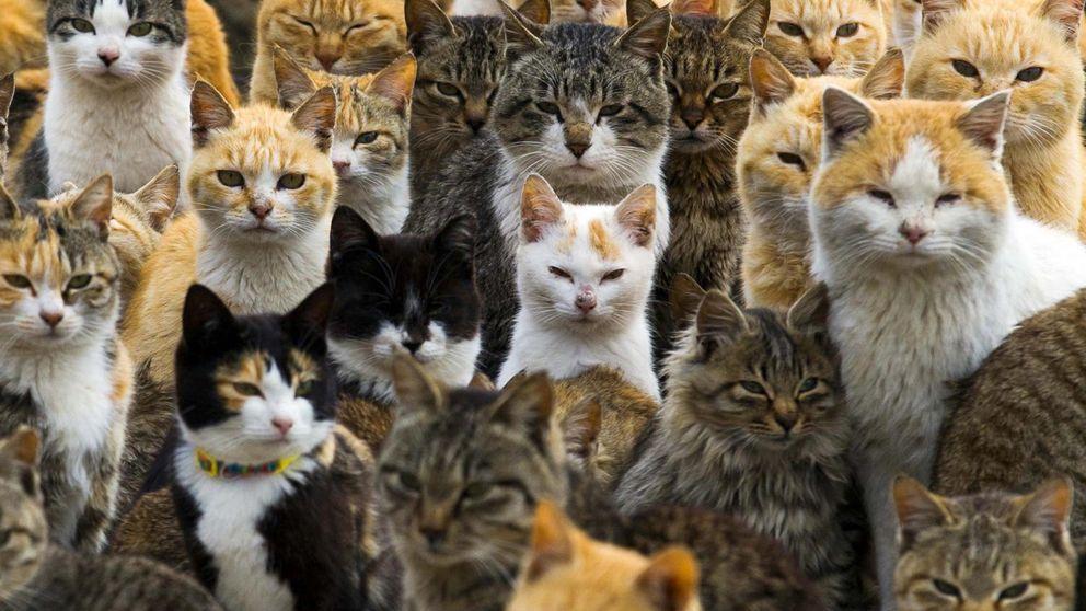 Bienvenidos a Aoshima: la isla de los gatos