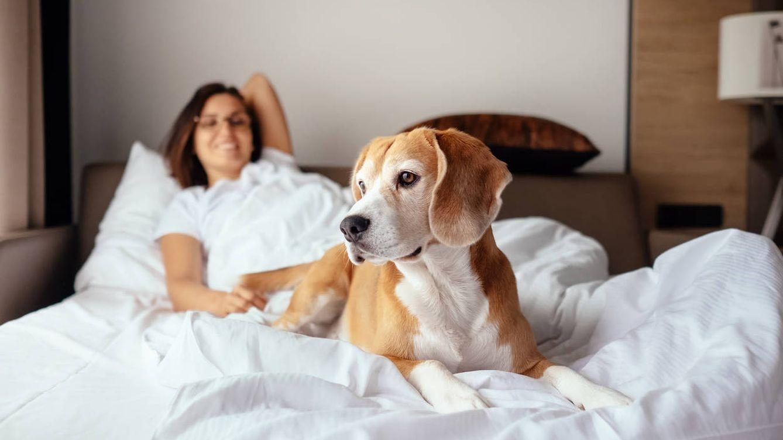Dormir con tu perro en la cama: cuándo puedes hacerlo y cuándo no deberías