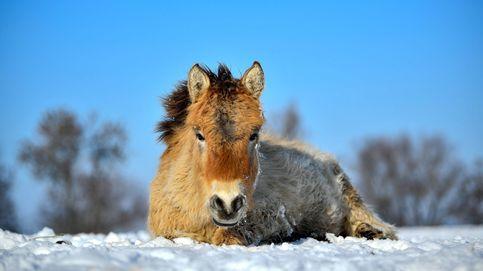 Caballos salvajes en Hungría y sal de Torrevieja para el deshielo de carreteras: el día en fotos