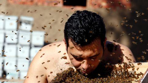 La tradición de 'la barba de abejas' y el encendido del árbol de Navidad en EEUU: el día en fotos