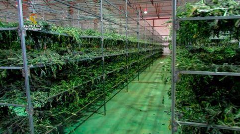 Más de cuatro toneladas de marihuana intervenidas en Teruel