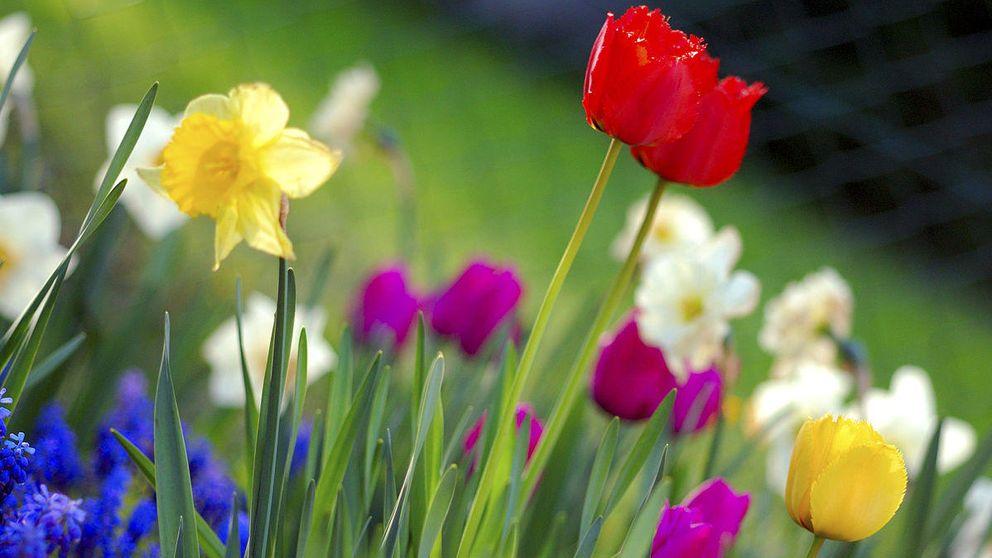 De Asturias a Huelva: siete destinos españoles para disfrutar de la primavera