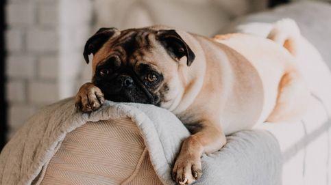 Si quieres vigilar a tu mascota, con este sistema tendrás perro feliz… y casa limpia