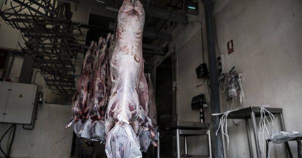 """""""¿Buscáis un cordero?"""": así consiguen los musulmanes la carne en los mataderos halal"""
