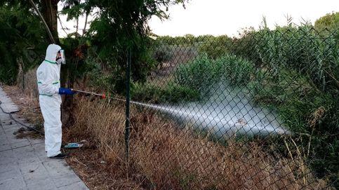 Fiebre del Nilo: dos caballos infectados en Badajoz