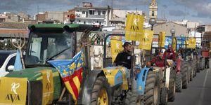 Foto: Las mandarinas más baratas de España: a los agricultores les pagan céntimo el kilo