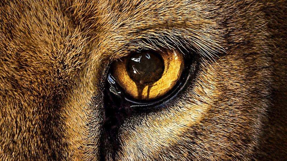 'Zoo' - ¿De qué va la nueva serie que estrena este jueves Cuatro?