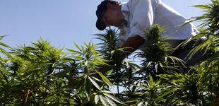 Post de Fumar marihuana en la adolescencia provoca depresión siendo adulto