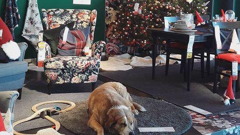Una tienda de Ikea en Italia abre sus puertas a los perros abandonados