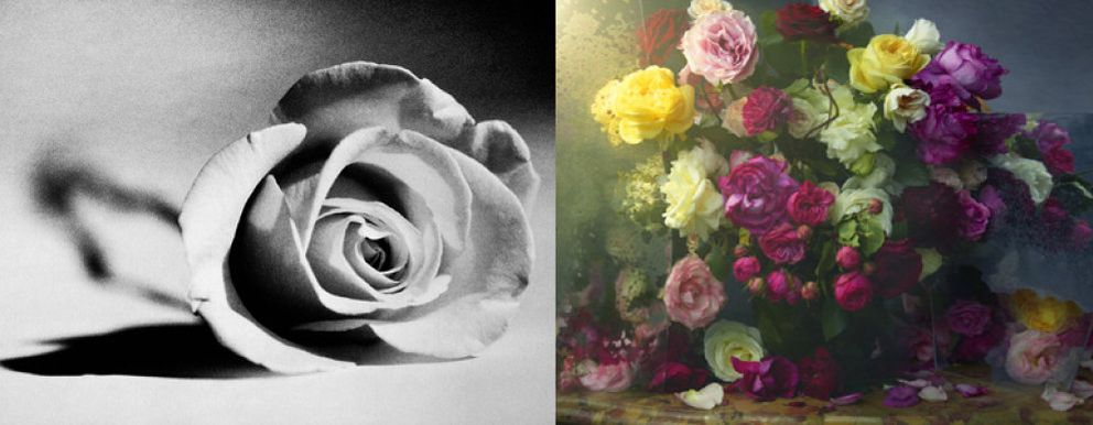 Foto: Veinte artistas para la rosa de Lancome